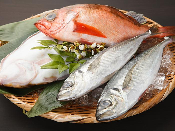 朝採れた鮮魚